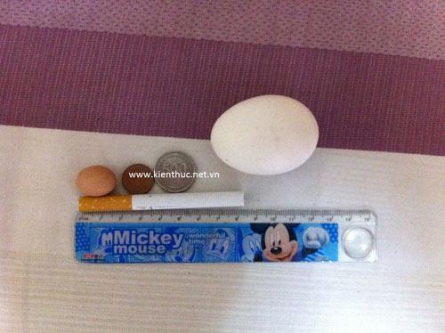 Hà Nội xuất hiện trứng gà bé hơn đồng xu - 4