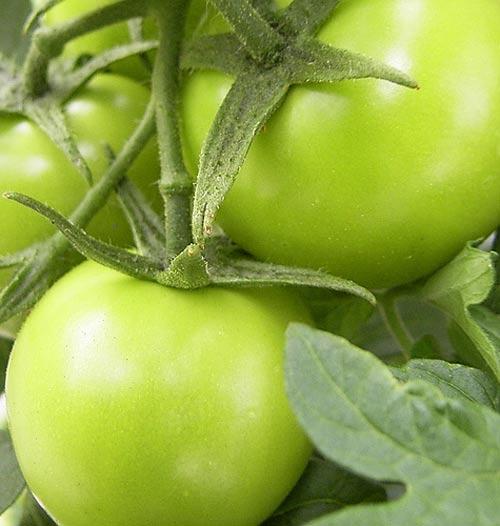 12 loại thực phẩm dễ bị nhiễm độc - 3