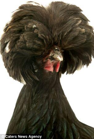 """Những kiểu """"tóc"""" hoang dã và kỳ thú nhất, Phi thường - kỳ quặc, chuyen la, chuyen la the gioi, chuyen la dong vat, kieu toc, long dong vat, su tu, khi, chim, cong, tin tuc"""