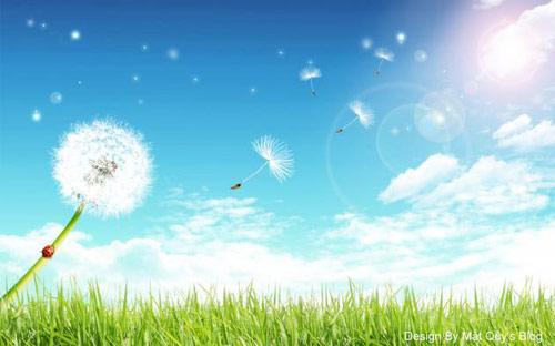 Thơ tình: Hoa cỏ may - 1