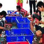 Thị trường - Tiêu dùng - Thương lái TQ núp bóng du khách mua cua biển