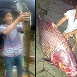 Phi thường - kỳ quặc - Những con cá dị nhất Việt Nam