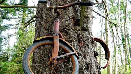 """Cây """"nuốt"""" xe đạp - 1"""
