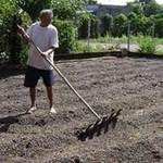 Thị trường - Tiêu dùng - Dự báo giá nông sản khó biến động mạnh năm 2013