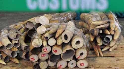 Hồng Kông: Thu giữ hơn 1 tấn ngà voi - 1