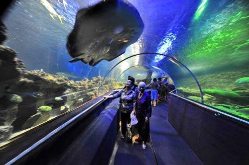Những điểm du lịch hút khách mùa đông ở VN - 2