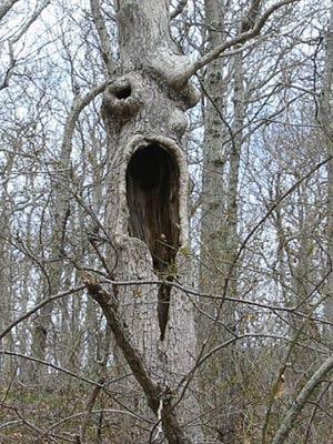 Những thân cây rùng rợn nhất thế giới - 1