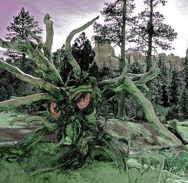 Những thân cây rùng rợn nhất thế giới - 2