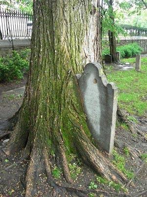 Những thân cây rùng rợn nhất thế giới - 4