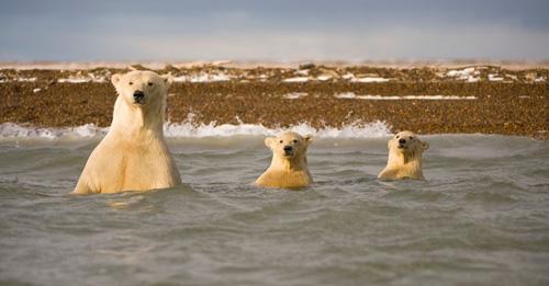 Ảnh đẹp: Sư tử biển viết thư pháp - 8
