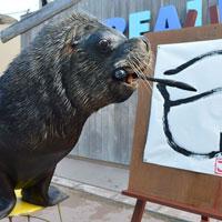 Ảnh đẹp: Sư tử biển viết thư pháp