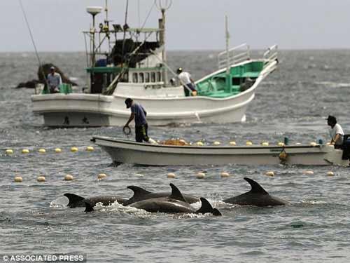 Thảm sát đẫm máu cá heo ở Nhật - 4