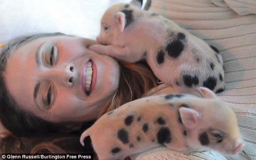 Cô gái ăn, ở với 40 con lợn - 2