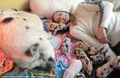 Cô gái ăn, ở với 40 con lợn - 1
