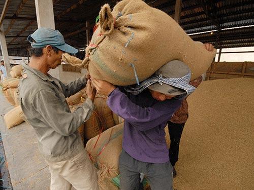 Xuất khẩu gạo 2013: Hạn chế hủy hợp đồng từ TQ - 1