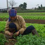 Thị trường - Tiêu dùng - Rét đậm: Thực phẩm tăng đủ kiểu