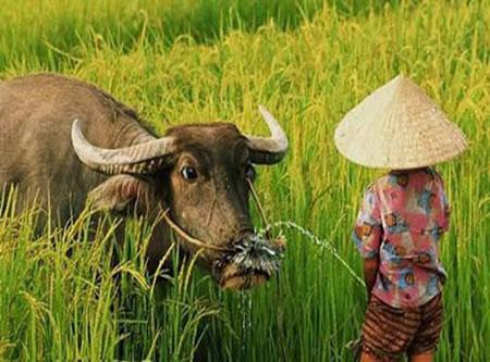 Ảnh Việt Nam: Chán hơn... con gián - 3