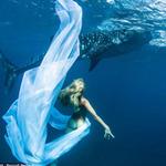 Phi thường - kỳ quặc - Xuống nước chụp hình cùng cá mập