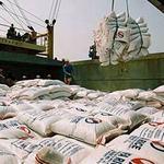 Thị trường - Tiêu dùng - Năm 2013: Khó tiêu thụ thóc, gạo