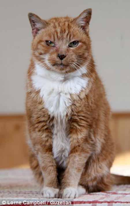 """Chú mèo """"già"""" nhất thế giới - 5"""