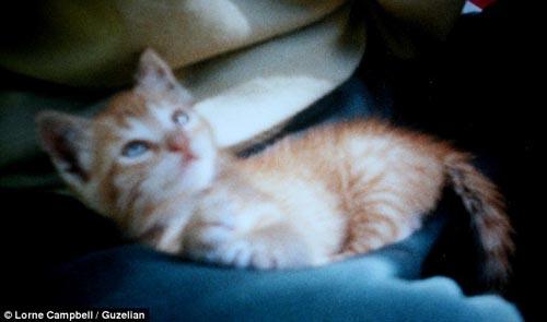 """Chú mèo """"già"""" nhất thế giới - 1"""