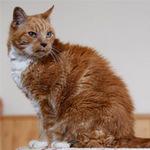 """Phi thường - kỳ quặc - Chú mèo """"già"""" nhất thế giới"""