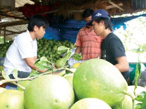 Cận Tết, trái cây sốt giá - 1