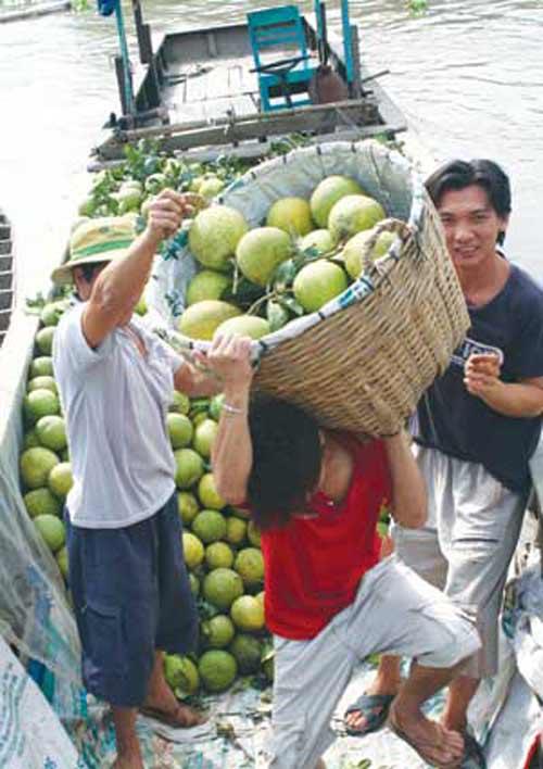 Cận Tết, trái cây sốt giá - 2