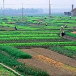 Tài chính - Bất động sản - Sửa Luật Đất đai: Bớt ưu tiên Nhà nước