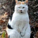 Thế giới - Clip mèo tự chống rét ở vệ đường gây sốt