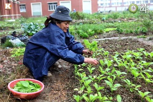 Biệt thự triệu đô chỉ để... trồng rau - 5