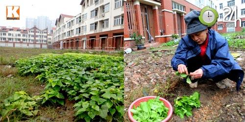 Biệt thự triệu đô chỉ để... trồng rau - 8