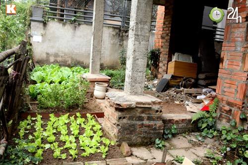 Biệt thự triệu đô chỉ để... trồng rau - 9