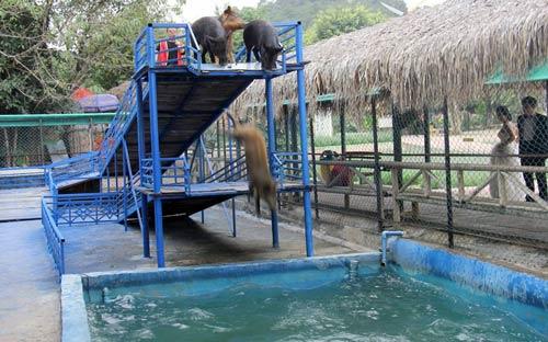 Ảnh đẹp: Thợ lặn bơi cùng cá mập hổ - 2