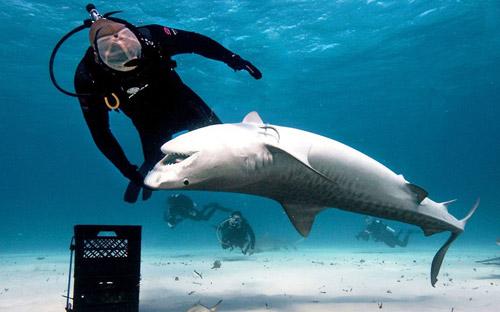Ảnh đẹp: Thợ lặn bơi cùng cá mập hổ - 3