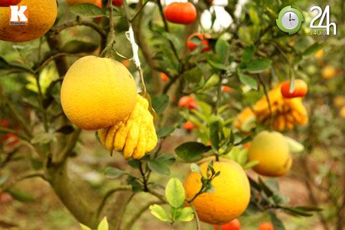 Kỳ lạ 1 cây cho 5 loại quả khác nhau - 7