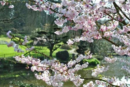 Khu vườn Nhật tuyệt đẹp ở châu Âu - 4