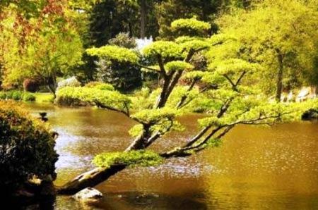 Khu vườn Nhật tuyệt đẹp ở châu Âu - 3