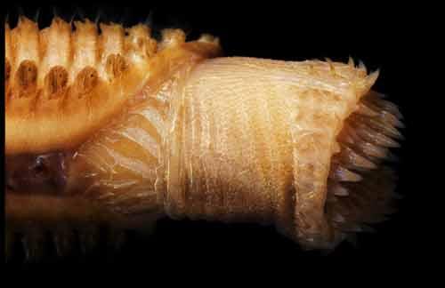 Những sinh vật đẹp lạ kỳ dưới biển sâu - 6