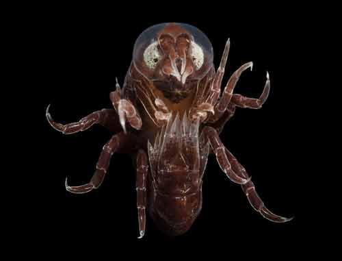 Những sinh vật đẹp lạ kỳ dưới biển sâu - 7