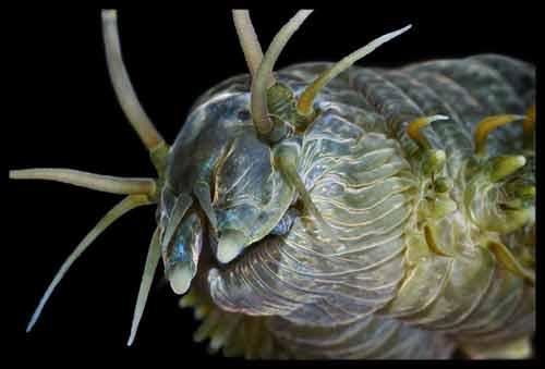 Những sinh vật đẹp lạ kỳ dưới biển sâu - 8