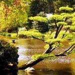 Du lịch - Khu vườn Nhật tuyệt đẹp ở châu Âu