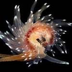 Thế giới - Những sinh vật đẹp lạ kỳ dưới biển sâu