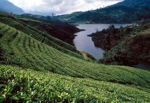Sri Lanka: giọt lệ tươi xanh vùng Nam Á - 1
