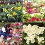 Bạn trẻ - Cuộc sống - Khu vườn xuân của sinh viên Nông nghiệp
