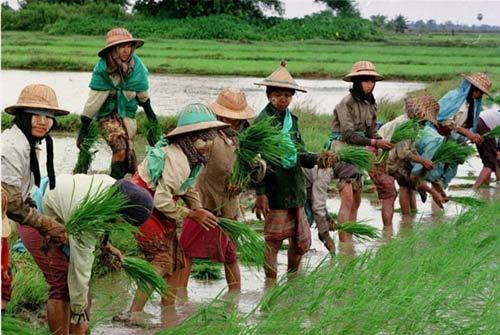 """Khám phá các """"mỏ vàng"""" của Myanmar - 10"""