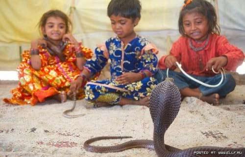 Trẻ vầy rắn hổ chúa: Chuyện nhỏ ở Ấn Độ - 1