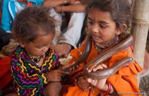 Trẻ vầy rắn hổ chúa: Chuyện nhỏ ở Ấn Độ - 2