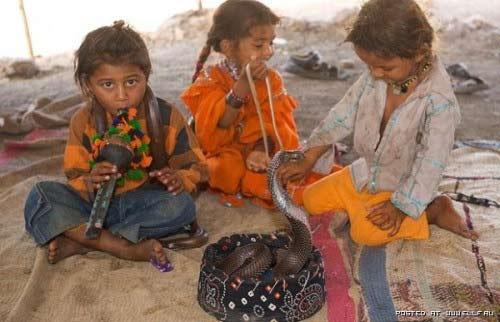 Trẻ vầy rắn hổ chúa: Chuyện nhỏ ở Ấn Độ - 3