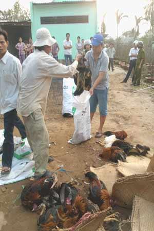 Bảo vệ dân phố xông vào nhà dân đập chết gà chọi - 2
